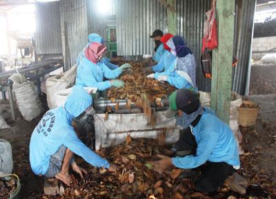 Sejumlah pekerja terlihat sibuk memilah daun mahoni untuk dijadikan pupuk kompos.
