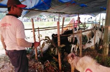 Pedagang hewan kurban di kawasan Surodinawan, Kota Mojokerto, Selasa (15/9) kemarin. [kariyadi/bhirawa]