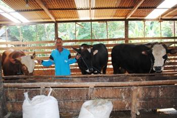 Ini Sapi Kurban yang dibeli Pakde Karwo (Kanan), Gus Ipul dan Sekda Prov Jatim.